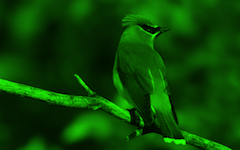 effect_sheding_green