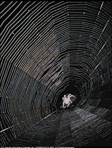 The net is not complex to the spider